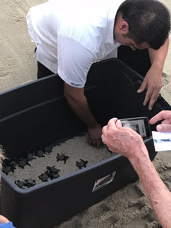 Cabo Azul Resort : Turtle release