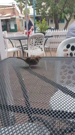 Denman, Australië: Cheeky sparrow.