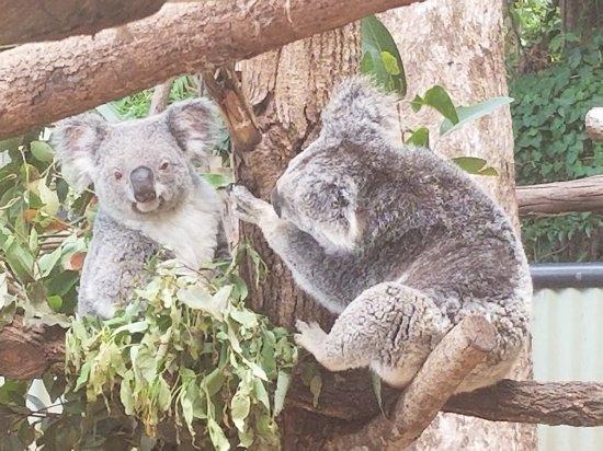 Woombye, Australia: 20171115_121441_large.jpg
