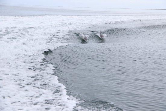 Kingscote, Αυστραλία: TIme to surf
