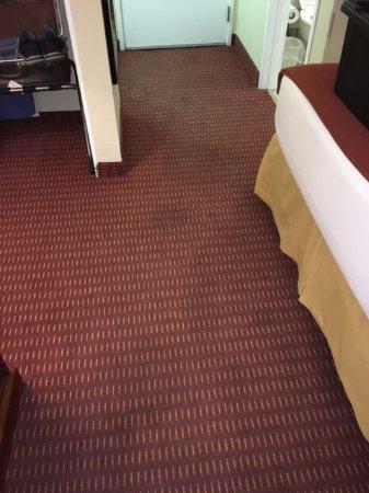 Lexington Inn - Holbrook, AZ: Pee spots all over carpet when we entered the room.