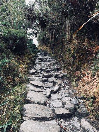 Llama Path: The path