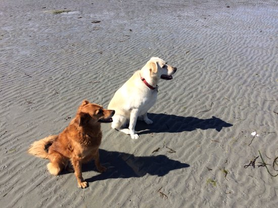 ‪‪Hornby Island‬, كندا: Molly and a local buddy at Tribune Bay‬