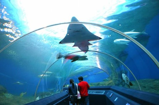 Pattaya Underwater World Tour met ...