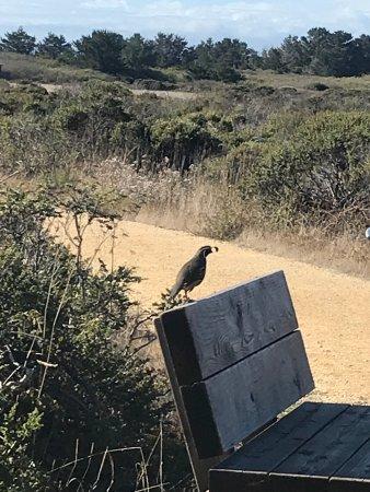 Pescadero, Californië: photo1.jpg