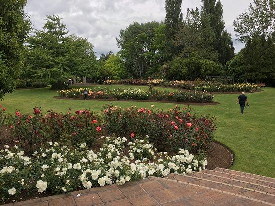 Hamilton Gardens Photo