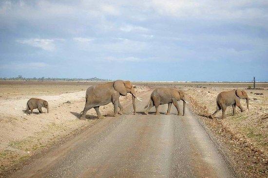 Amboseli National Park, Kenya: IMG_20171116_080750_809_large.jpg