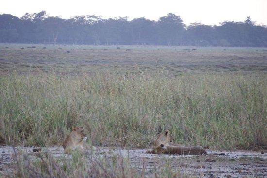 Amboseli National Park, Kenya: received_1805636109474976_large.jpg