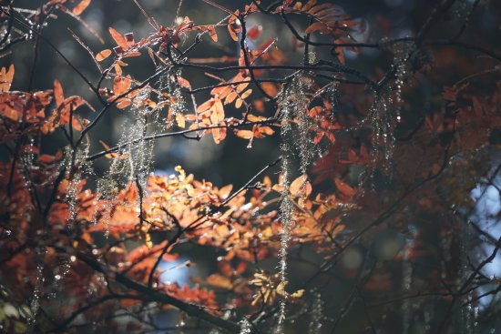 "Potatso National Park: ""crystal"" plants"