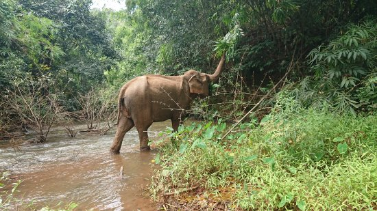 Sen Monorom, Kambodscha: Elephant eating lunch nearby during the tour