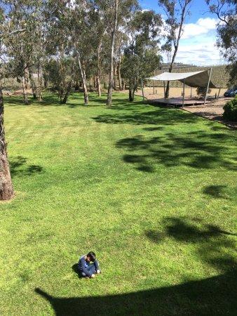 Lilydale, Australia: 와인과 잔디