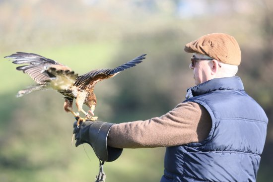 Oxenhope, UK: SMJ Falconry