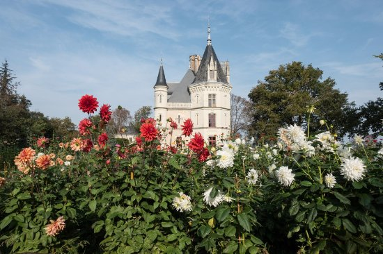 Montreuil-sur-Loir, Fransa: Alice's flower garden which supplies flowers for all the rooms