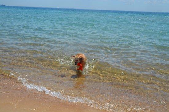 Dromana, Australia: Beach