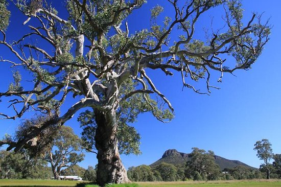 Dunkeld, Australia: Mount Abrupt