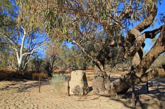Thargomindah, Australia: Burke and Wills Tree