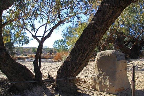 Burke and Wills Tree: Burke and Wills Tree