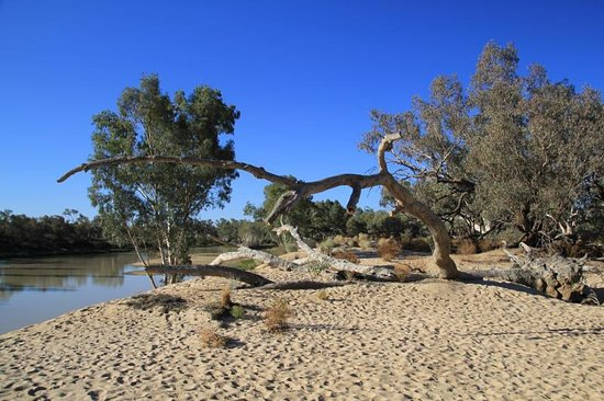 Thargomindah, Australien: Burke and Wills Tree