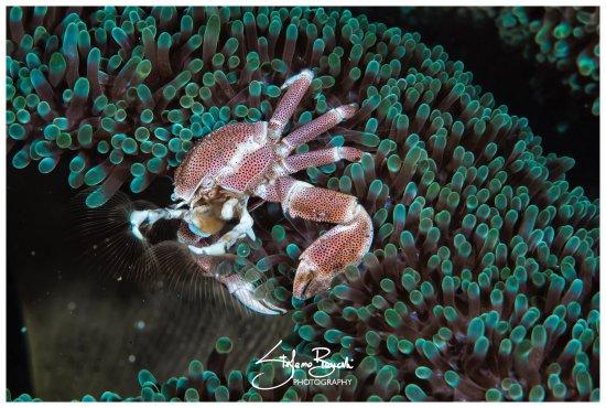 Siladen Island, Indonesia: photo0.jpg