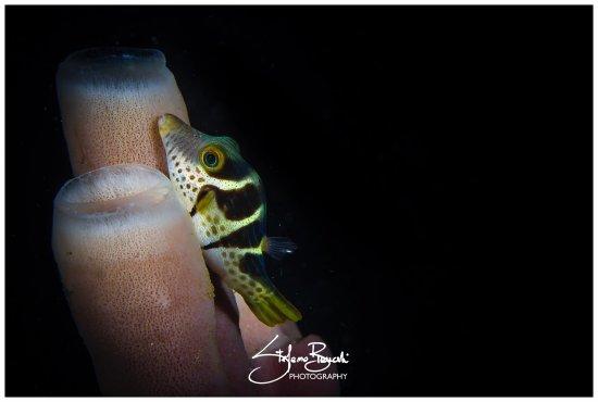 Siladen Island, Indonesia: photo2.jpg