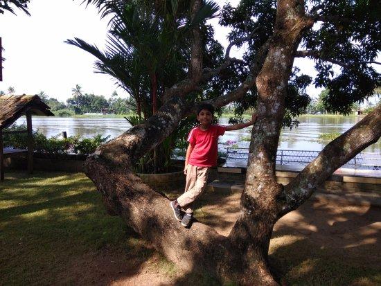 Green Palace Kerala Resort: Landscaping area