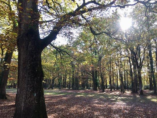 Bois de Saint-Pierre