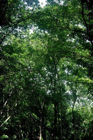Loboc, Philippines: Mahogany Forest