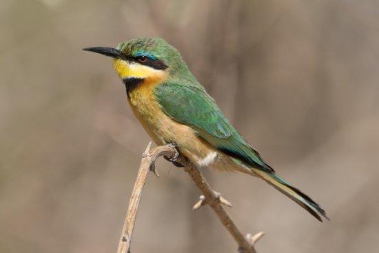 Linyanti Reserve Foto