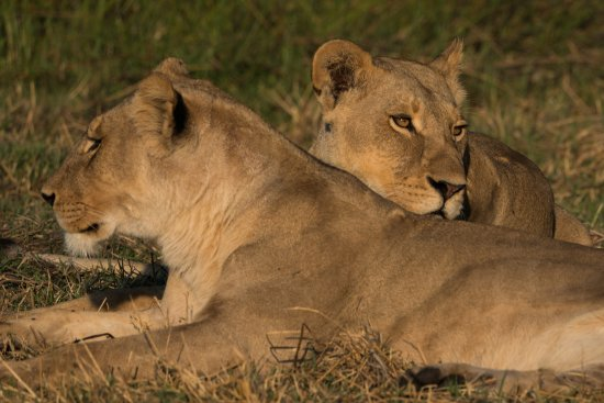 Khwai Tented Camp Picture