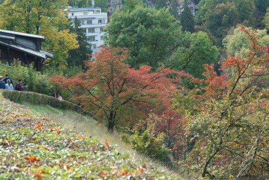 Rose Garden (Rosengarten): Giardino giapponese nel Rose Garden