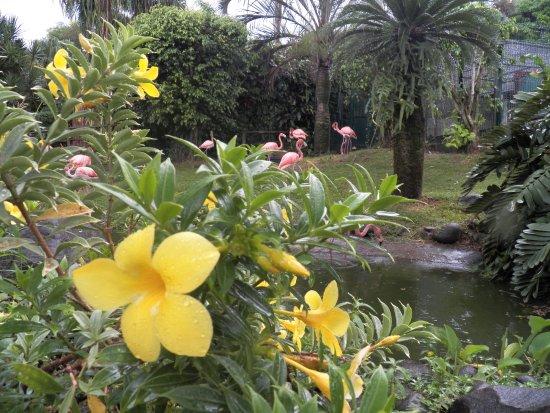 Deshaies, Guadeloupe: enclos des flamants roses