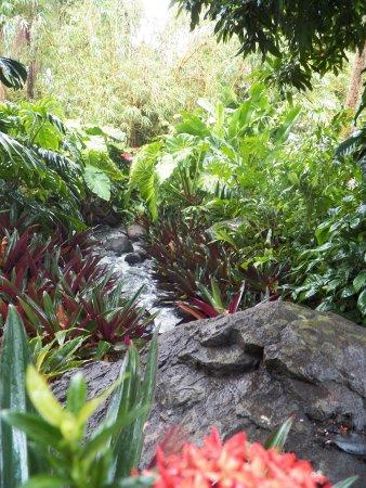 Jardin botanique de deshaies guadeloupe anmeldelser - Jardin botanique guadeloupe basse terre ...