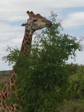 Kruger National Park: IMG-20171109-WA0002_large.jpg