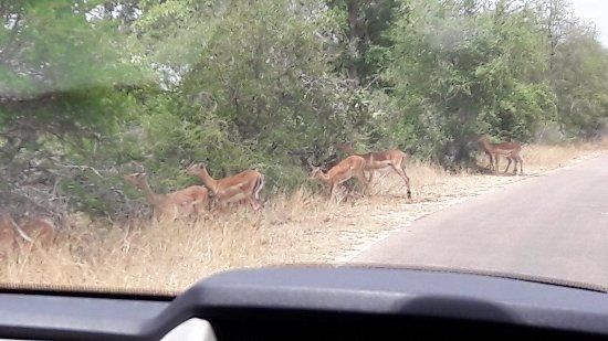 Kruger National Park: 20171109_113504_large.jpg