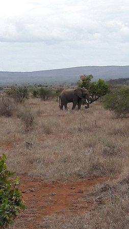 Kruger National Park: 20171108_164229_large.jpg