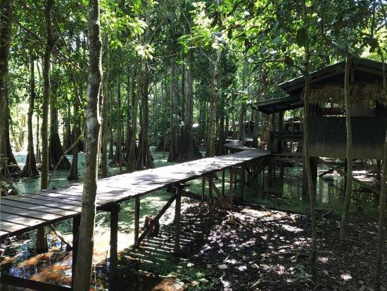Sandakan Division, Malaysia: photo7.jpg