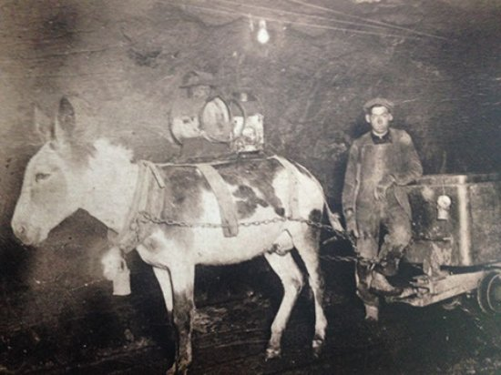 Georgetown, CO: Sometimes mules and donkeys were used to pull ore carts.