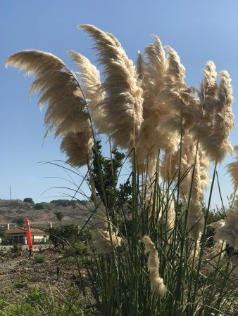 The Point Vicente Interpretive Center: Heavenly place