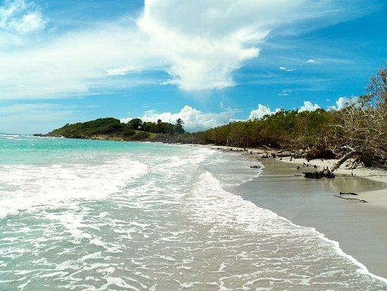 Le Gosier, Guadeloupe: A l'état sauvage
