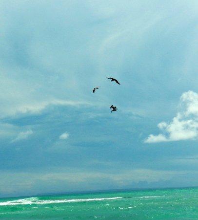 Le Gosier, Guadeloupe: Piquet canard