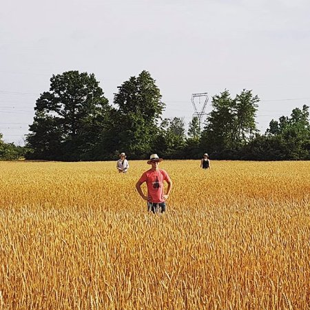 Bath, Canada: Fields of gold.