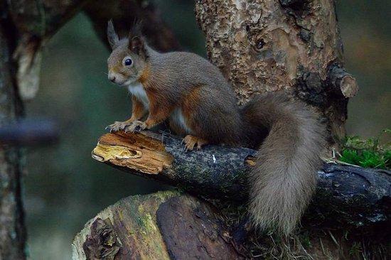Blairgowrie, UK: Recent sightings