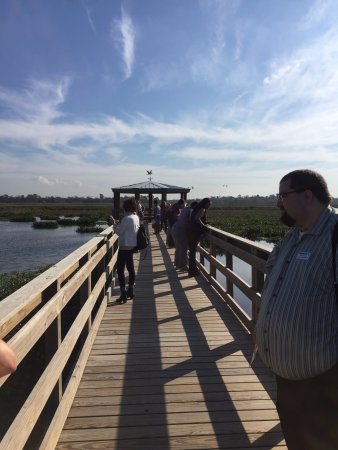 Cattail Marsh: Checking out all of the birds on our tour today. We saw so many ducks today and two alligators!