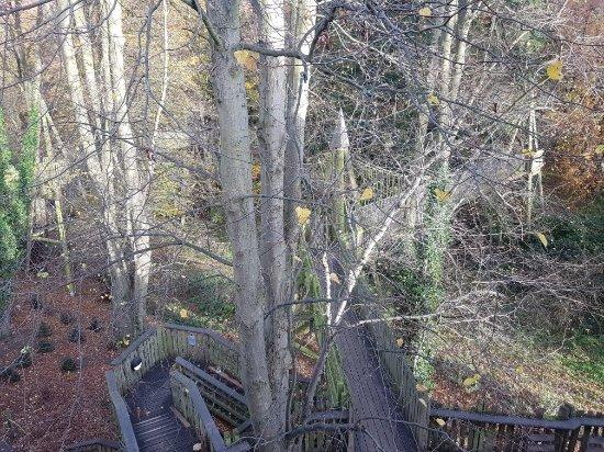 The Alnwick Garden: 20171109_140029_large.jpg