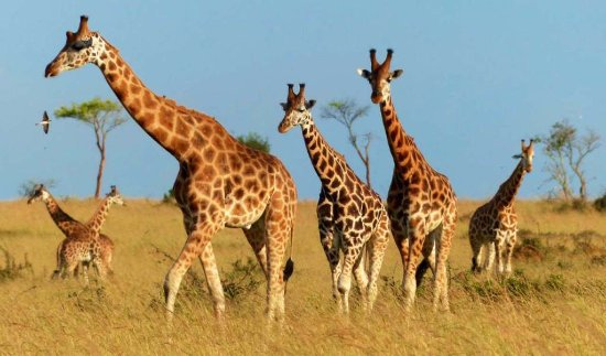 Murchison Falls National Park, Uganda: Lets' have a walk