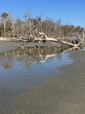 Isle of Palms, SC: Boneyard beach on Capers Island