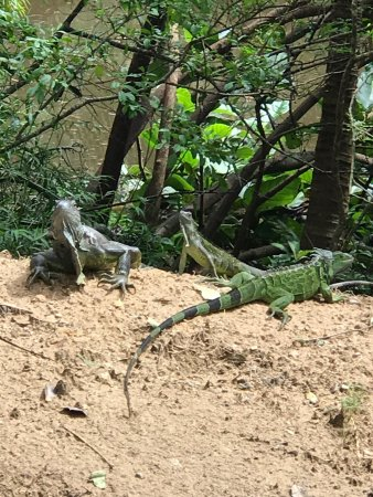 Gumbalimba Park: photo3.jpg