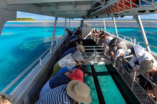 Bundaberg, Australia: Glass Bottom Boat Tours