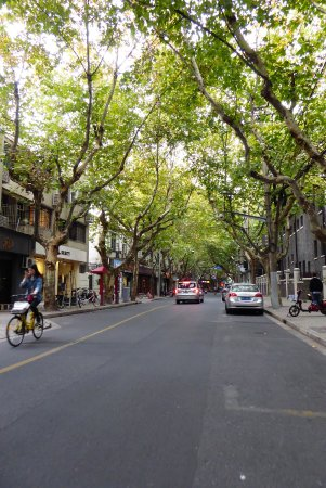 Insiders-Shanghai Private One-day Tour: French Concession