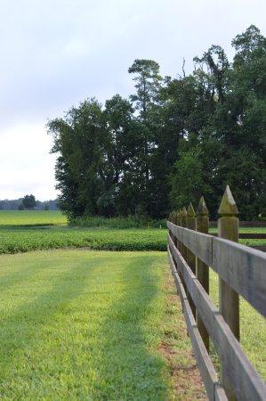 Surry, VA: Fenceline, Chippokes